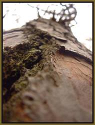 Tree Bark by effaced
