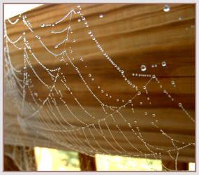 Spiderwebs by effaced