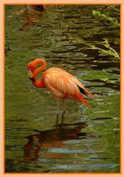 Flamingo by effaced
