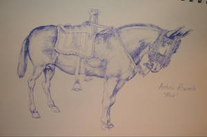 Mule by LaPointeVArt