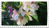 apple blossoms stamp by hyenatxt