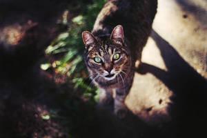 little tiger by justashadowleft