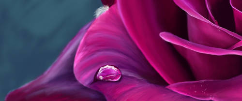 Rose with water drop  4K by Lali-the-Bunny