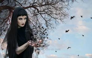 BIRDS by Deena-Lee-Sauve