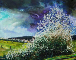 Hawthorn in blossom 108 by pledent
