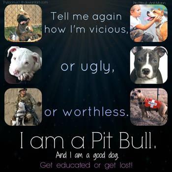 I am a Pitbull by Thylacinus1