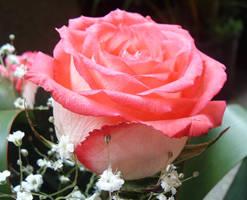 Almost Pink by bibiana-tenebra