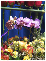 Colorful Garden by bibiana-tenebra