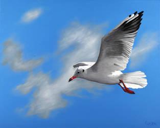 seagull No 2 by guidokleinhans