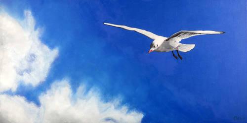seagull No 1 by guidokleinhans