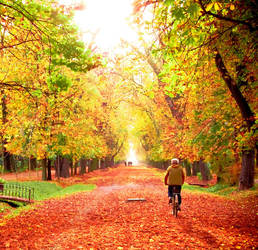 my autumn symphony by LuizaLazar