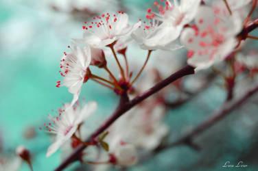 Spring love wallpaper by LuizaLazar
