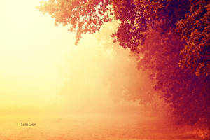 Autumn Morning by LuizaLazar