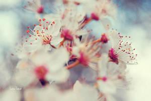 Bright Days by LuizaLazar
