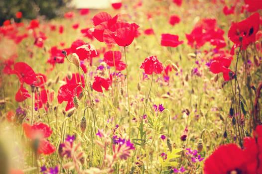 Whisperings of Scarlet Fields by LuizaLazar