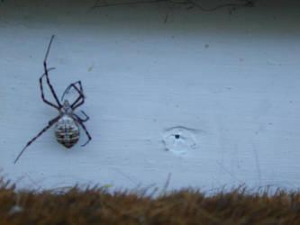 Lovely Spider by nada-ari