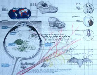 Bat Eyesight Study by nada-ari