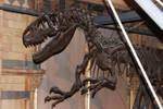 Allosaurus Skeleton Closeup by ak1508