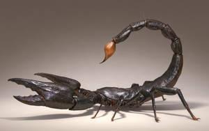 Scorpion rework by KenichiNishida