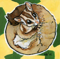 Sugar Glider by Puppy-Chow
