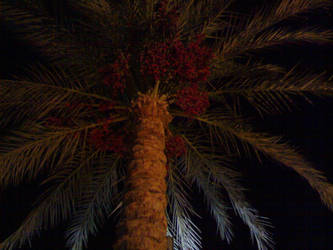 Palm Tree by MReX19985