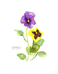Pansy :P by DU57Y