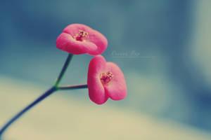 Superflower by SilentDisaster-bOOm