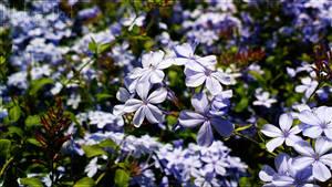 Little Flowers V by MichaelNN