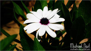 White Flower II by MichaelNN