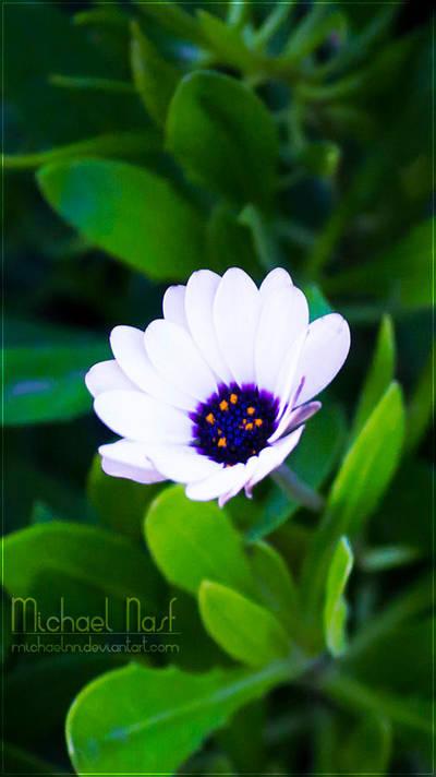 White Flower III by MichaelNN