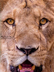 Face Of A Beast by MichaelNN