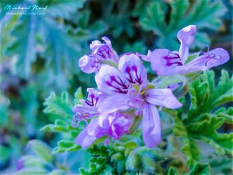 Spring Flower by MichaelNN