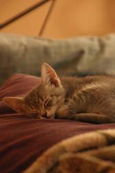 My flippin' cat by KarlVonDammit