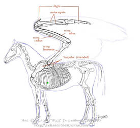 Pegasus Physiology 1 by algy