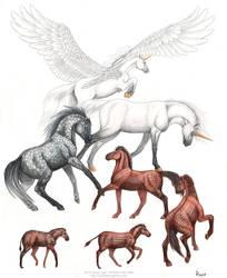 Evolutionary Mythology by algy