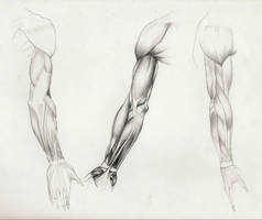 Anatomy of Arm: muscles by EpHyGeNiA