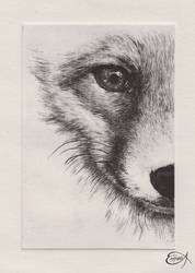 Half baby Wolf by EpHyGeNiA