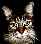 Dark Cat by flufflestehleemerman