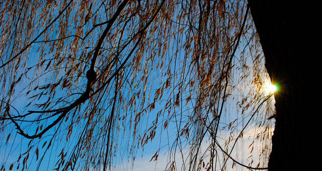In The Willow by flufflestehleemerman