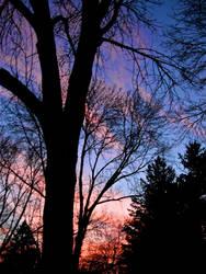Veins of a Sunset by flufflestehleemerman
