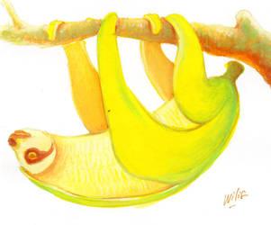 bananasloth by willustration