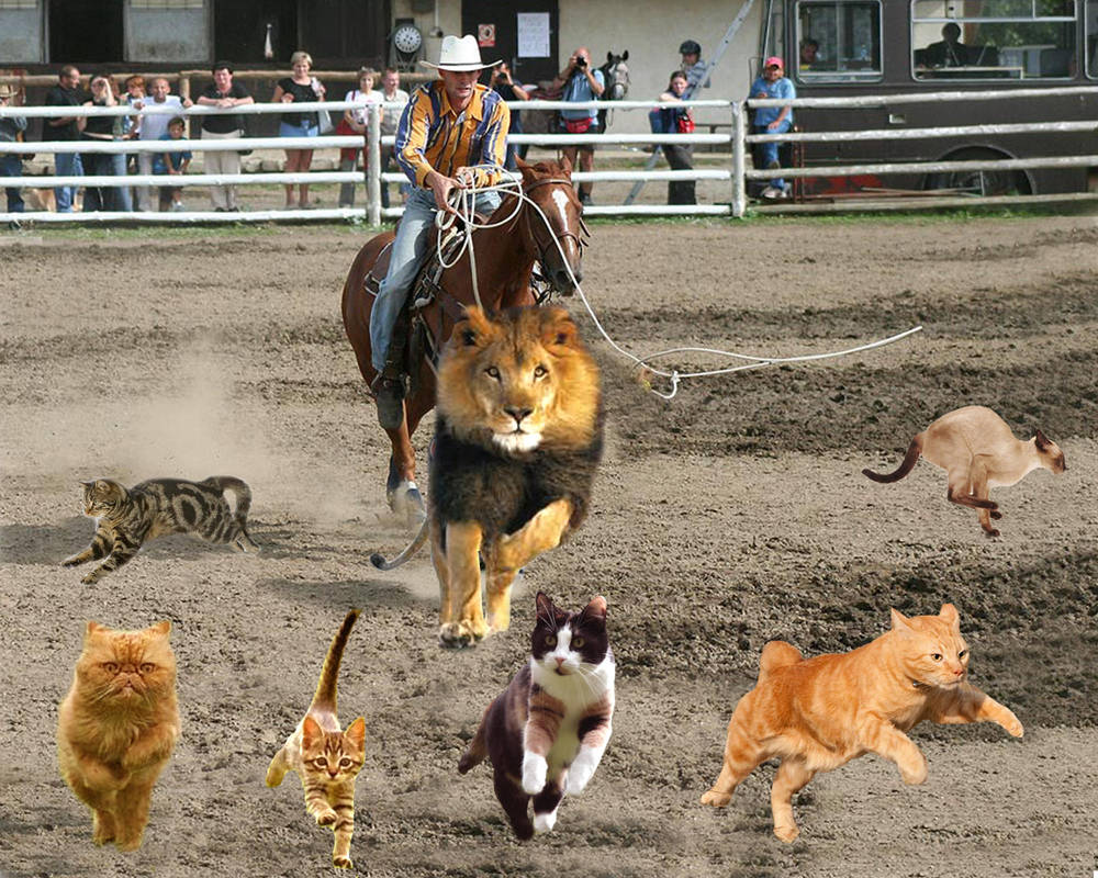 Herding Cats by timmyconcord