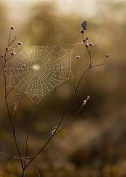 spiderweb by dralik