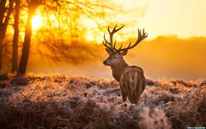 Deer sunset | Don Lichterman Sunset Recordings by donlichtermansunsetr