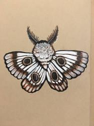 Fuzzy Moth by meropepa