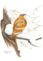 Snowy Owl by AndromedasWitchery