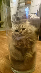Cat in a Jar by GrauerWolf