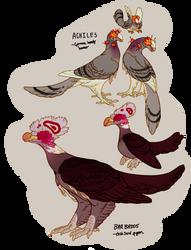 Palomaptor Babs by Avian-king