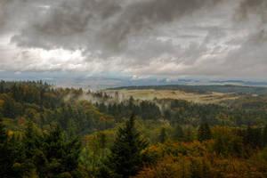 forest steam by stlasidylko