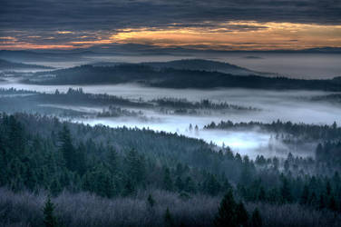 foggy morning by stlasidylko